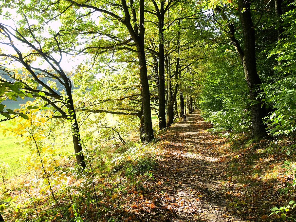 Papstdorf_Herbst_2012 (8)